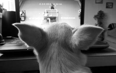 Egy kutya magán-élete