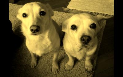 Hétfő avagy Ouspensky kutyái….