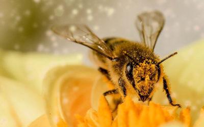 Május 20. A méhek világnapja
